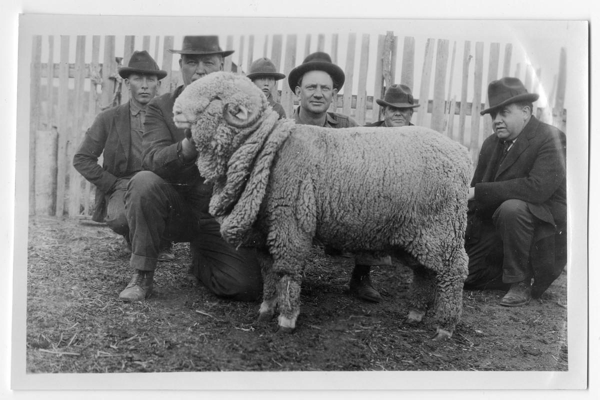 Sheep Judging Demonstration