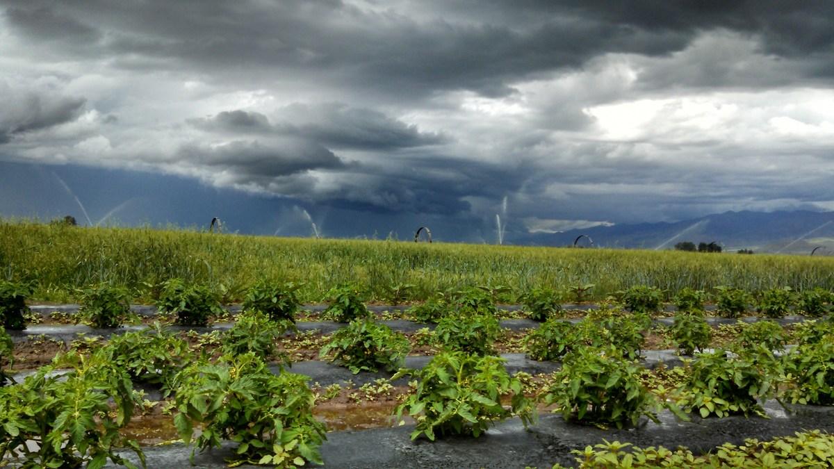 Stormy field at Johnson Family Farm in Benson, Utah