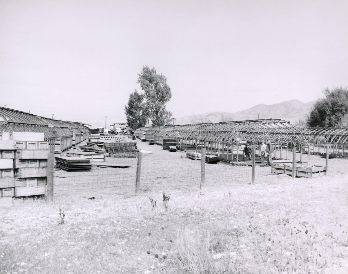 Quonset Hut housing under construction, 1946