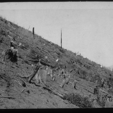 Overgrazed and Burned Area, Bear River Range,1925