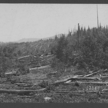 Burned spruce and fir forest, on top of ridge on west side of Logan River basin, July 8, 1902