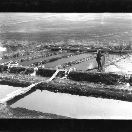 Maple Spring Trout Hatchery, Mantua, Utah, 1908, with man pulling nets