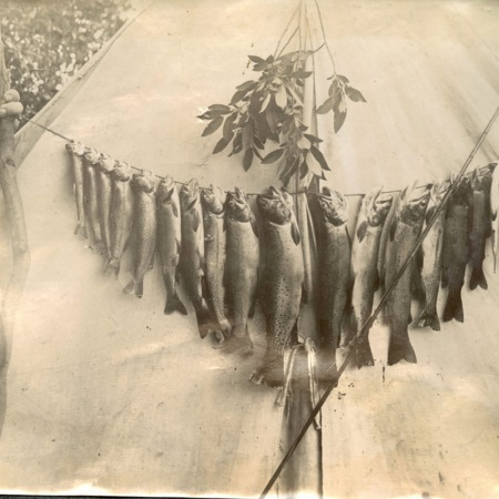 Display of trout