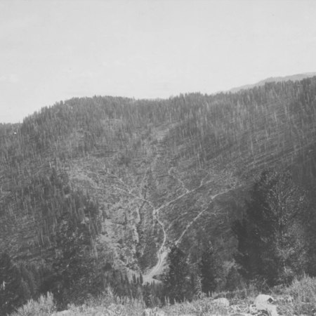 North Canyon Skid Trails,ca. 1921
