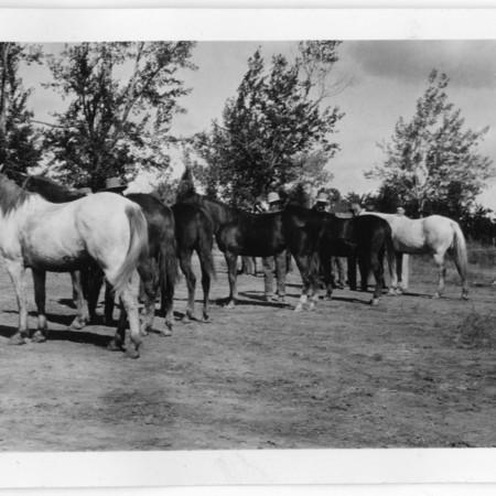 Thoroughbred horseshow