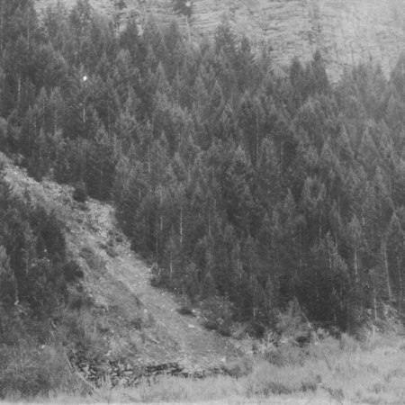 Logan Canyon, 40 Year Old Douglass Fir Regrowth, ca. 1910