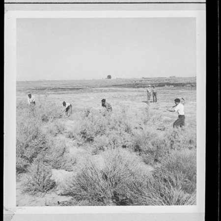 Workers clearing fields