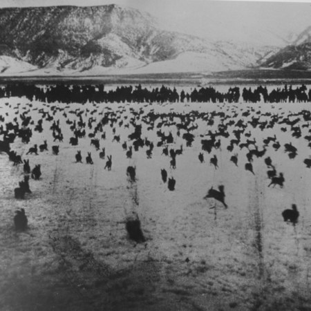 Jack rabbit round up in northern Sanpete County, Utah, ca. 1912