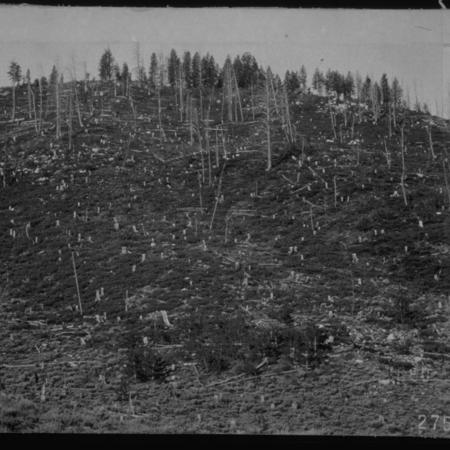 Clear Cutting, Stump Hollow, Bear River Range, ca. 1910