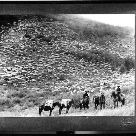 Large herd of sheep grazing on a hillside, herders in foreground, Box Elder County