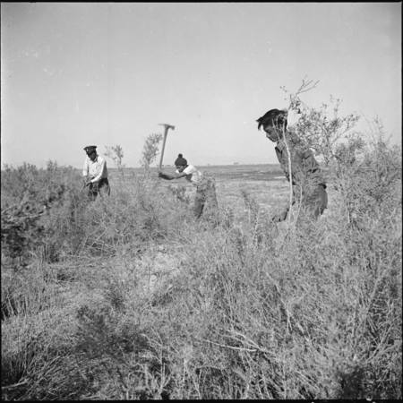 Densho_Japanese_American_volunteers_clearing_land.jpg