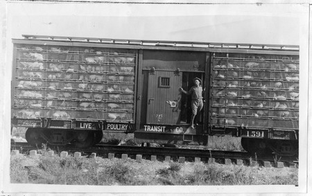 Railroad Car of Poultry