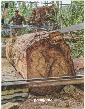 Patagonia, giant log, 2017