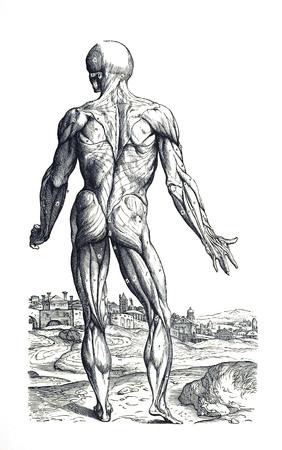 Muscle man 6