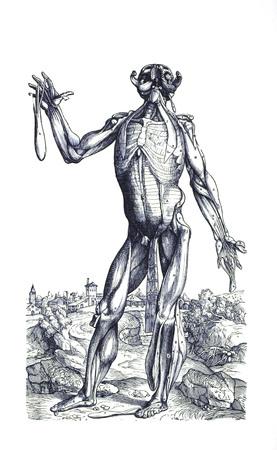 Muscle man 4