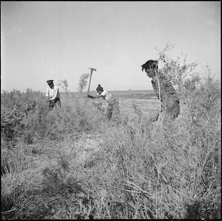 Densho_Japanese_American_volunteers_clearing_land.jpg