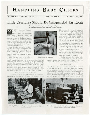 "Railroad Bulletin, ""Handling Baby Chicks,"" Right Way Bulletin No. 6, 1931<br />"